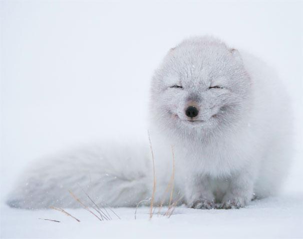 25 улыбающихся животных, которые вызывают улыбку и поднимают настроение