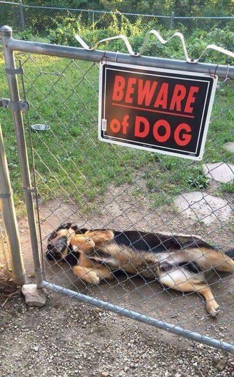 """10 фото самых """"злых"""" собак, которые вызывают улыбку"""