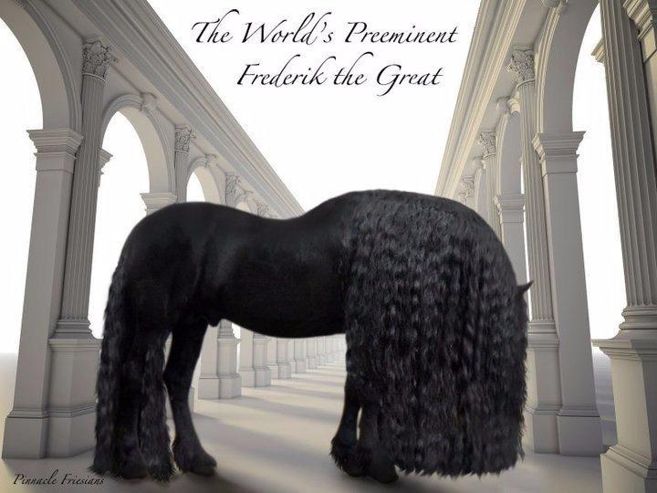 5 фото самого красивого коня в мире