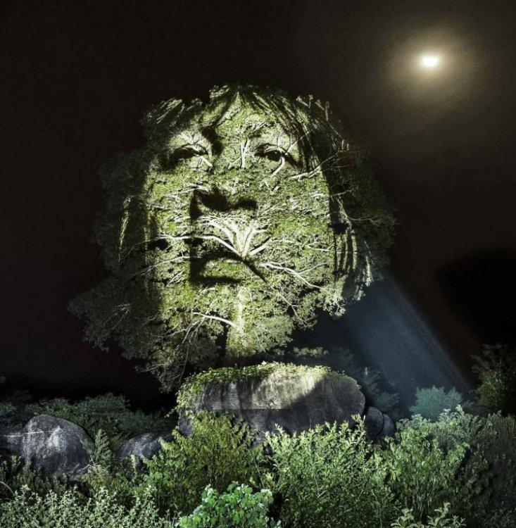 Французский художник написал картины светом в амазонских джунглях (9 фото)