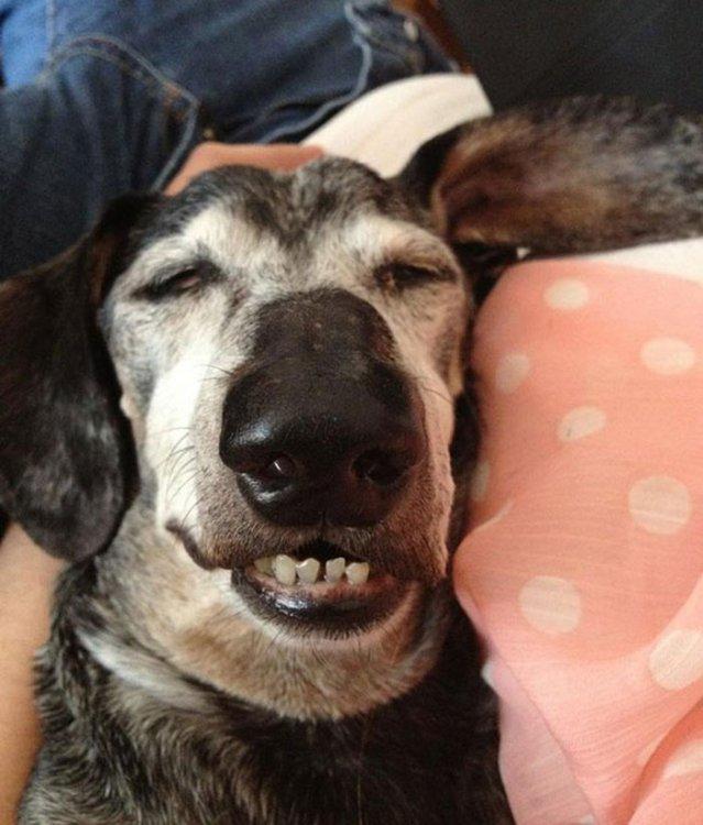 12 фото милых спящих щеночков