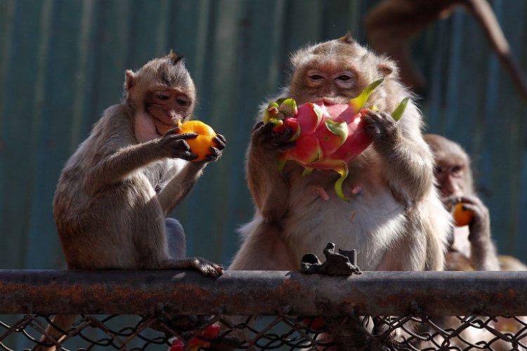 Monkey Buffet Festival: настоящий пир для местных обезьян
