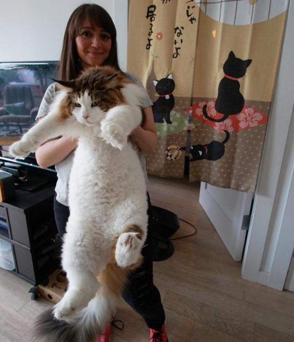 Знакомьтесь с самым большим котом Нью-Йорка