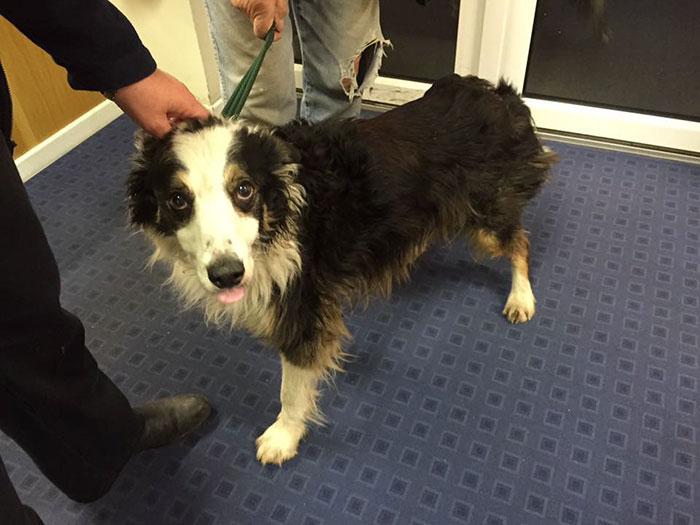Трогательная история о Преданности: собака отправилась на поиски пропавшей хозяйки