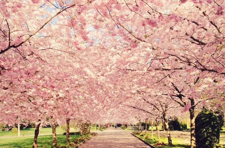 Весна идет: яркие кадры цветущих садов мира