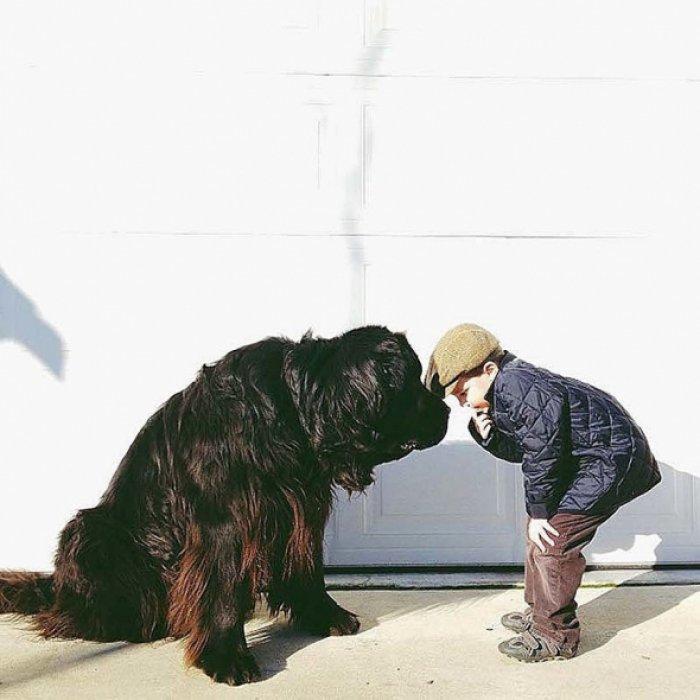 Трогательные истории дружбы детей и животных