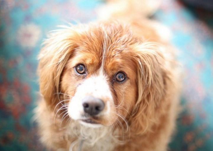 Собаки чуют ложь человека