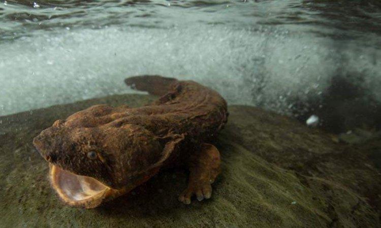 Редкие и малоизученные существа нашей планеты