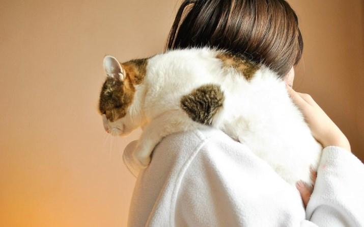 Чувствуют ли кошки человека?