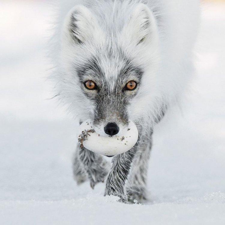 Лучшие фотографии животных 2017 года