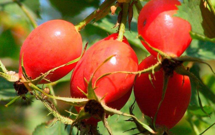 Вкусные и полезные ягоды осеннего времени