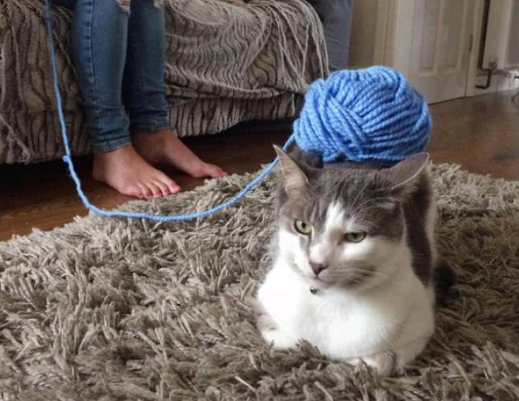 У кошек железные нервы