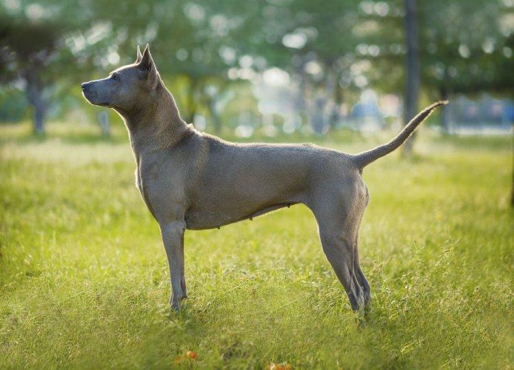 Самые редкие породы собак на земном шаре