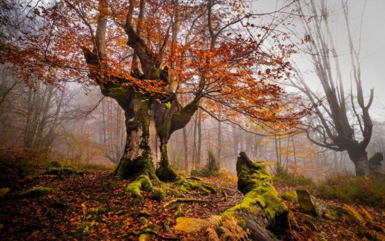 Почему деревья стесняются?