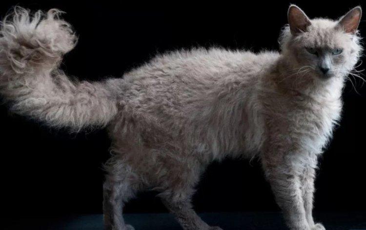 Уникальные породы кошек, которые стоят целое состояние