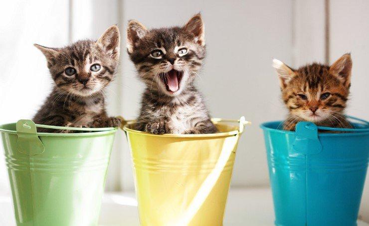Кошачьи экскременты – путь в сферу бизнеса 4