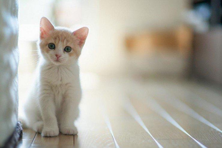 Кошачьи экскременты – путь в сферу бизнеса 1