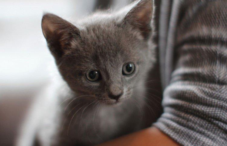 Кошачьи экскременты – путь в сферу бизнеса 3