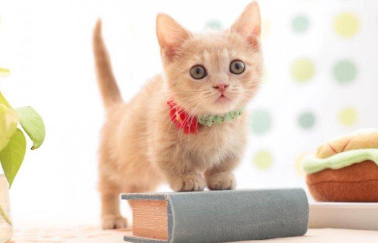 Кошачьи экскременты – путь в сферу бизнеса 2