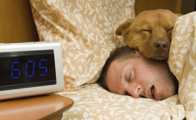 Много спать – вредить сердечно-сосудистой системе 1