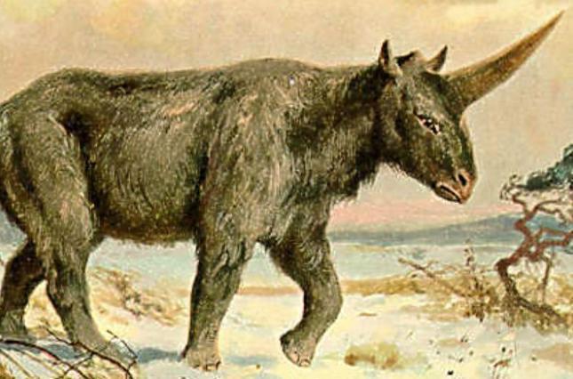 На территории Киевской Руси могли проживать уникальные животные 3