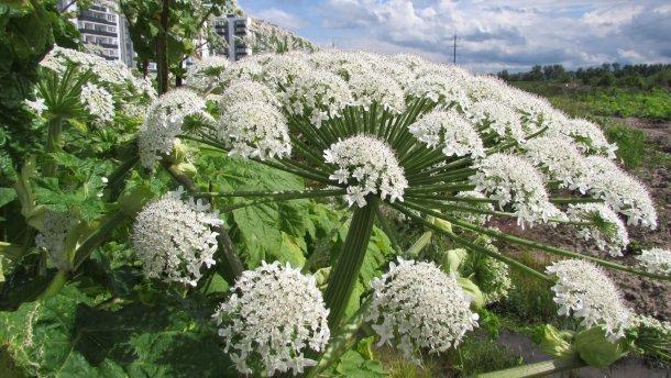 Растения, которые лучше избегать стороной