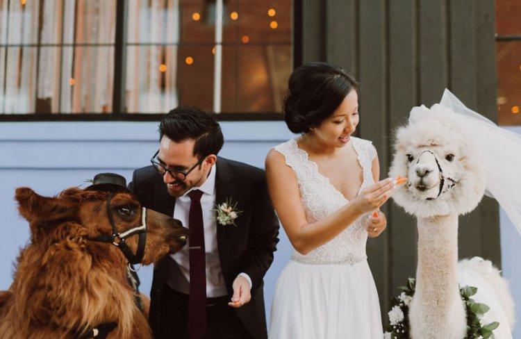 Хотите оригинальных ведущих на вашей свадьбе?