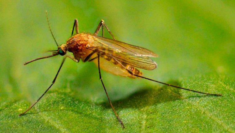 Виды дезинсекции от насекомых